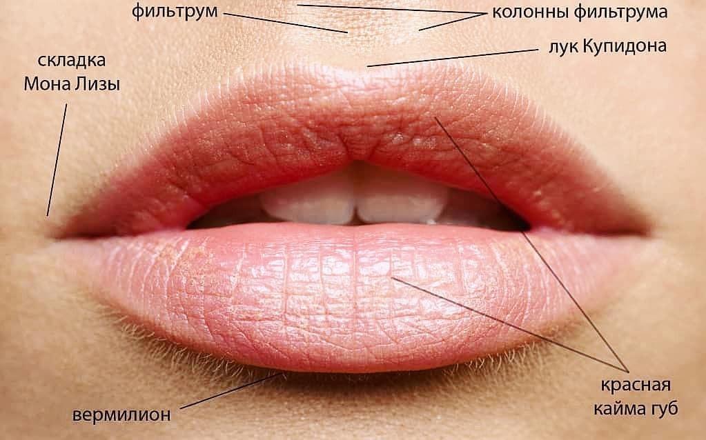 Губы Лук Купидона фото