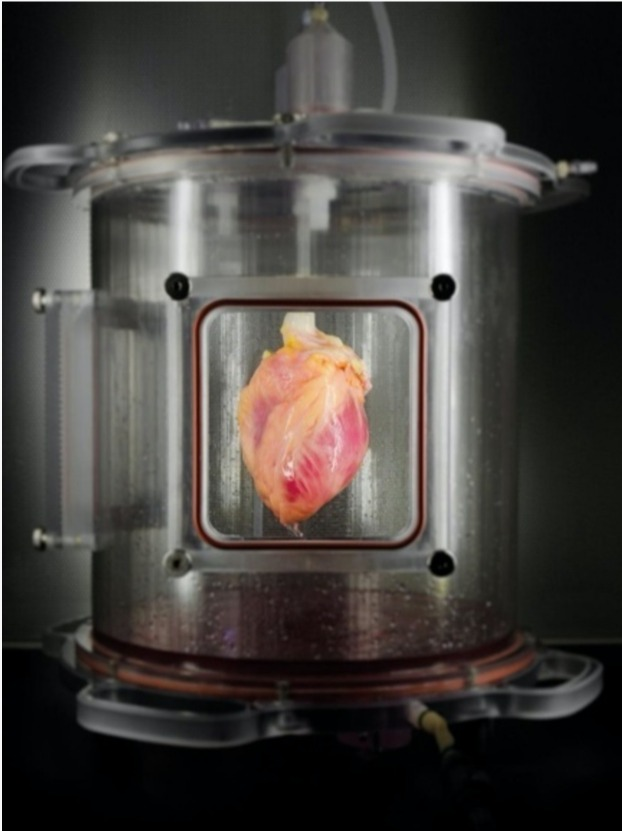 Сердце из СК