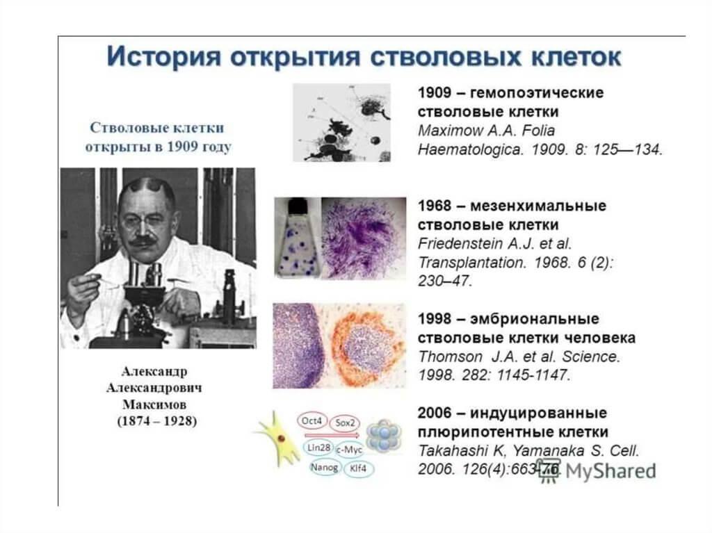 Стволовые клетки: глаз в чашке и ухо на руке
